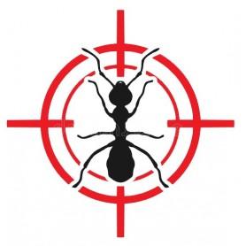 Contrat annuel désinsectisation fourmis